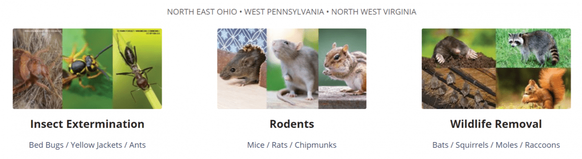 "Options for Expert Pest Management, ""Pest Control Near Me."""